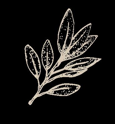 Bhringraja Herb