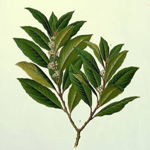 Read: Bay Leaf Magic: How to Manifest your Wishes